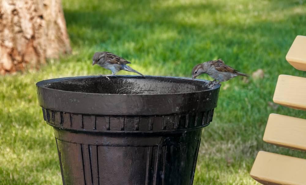 Cette start-up entraîne les oiseaux à ramasser les déchets