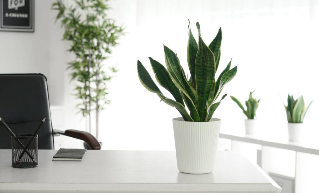 Nektar Studio, le jardinier 2.0