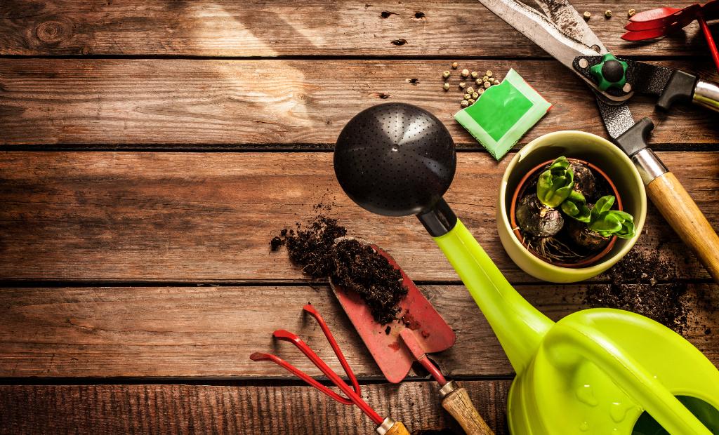Maïa-Ko : la start-up 100% naturelle pour le jardin