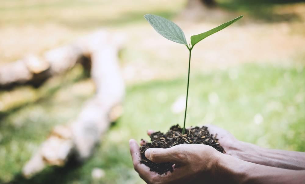 Refoorest : une nouvelle start-up au service des arbres