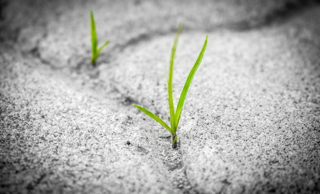 Zei accompagne les entreprises pour améliorer leur impact sur l'environnement
