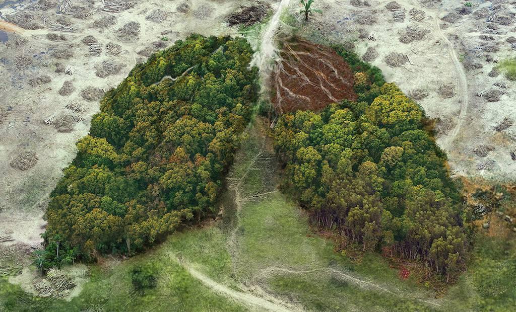 Unilever revoit son impact sur la déforestation
